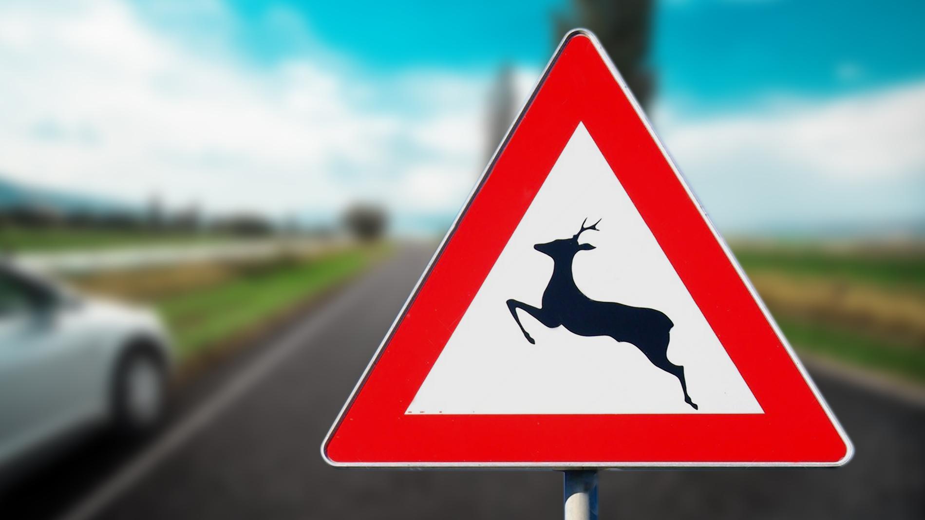 Incidente con fauna selvatica - Carrozzeria Bergamo e provincia